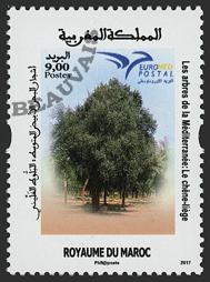 Maroc - 2017/11 - Euromed - Chêne-liège