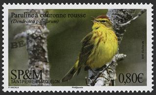 Saint-Pierre et Miquelon - 2018/02 - Paruline à couronne rousse