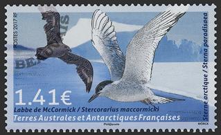 Terres-Australes - 2018/01 - Oiseau Labbe de Mc Cormick