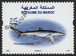 Maroc - 2017/04 - Poisson - Prionace Glauca
