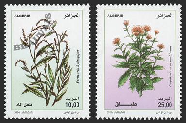 Algérie - 2017/04 - Plantes médicinales