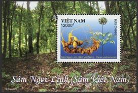 Viet-Nam - République - 2017/11 - Ginseng